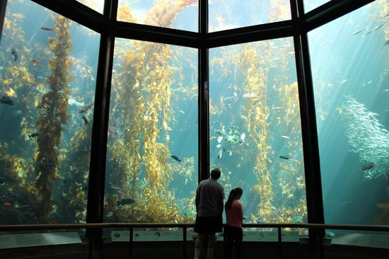 term papers on monterey bay Our undergraduate research opportunities center matches undergrad   monterey bay and the monterey county business council, working together to.
