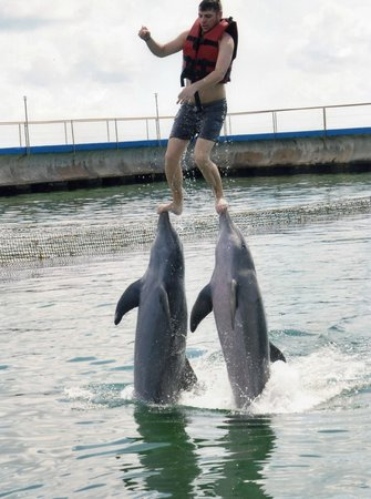 Hotel Riu Varadero: For a tip the dolphin excursion can be really