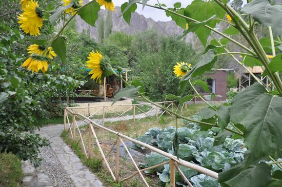 Fresh veggies picture of nubra organic retreat hundur for Au jardin du gouverneur quebec