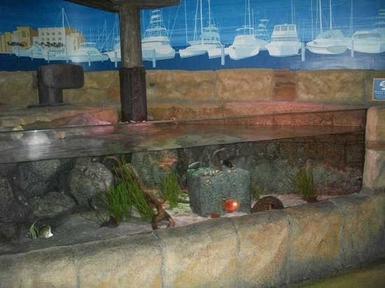 Sea Life Aquarium Kids Underwater Exhibit Picture Of