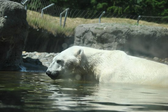 Relaxing Swim Picture Of Point Defiance Zoo Aquarium