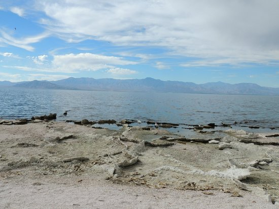The salton sea picture of salton sea california for Salton sea fishing report