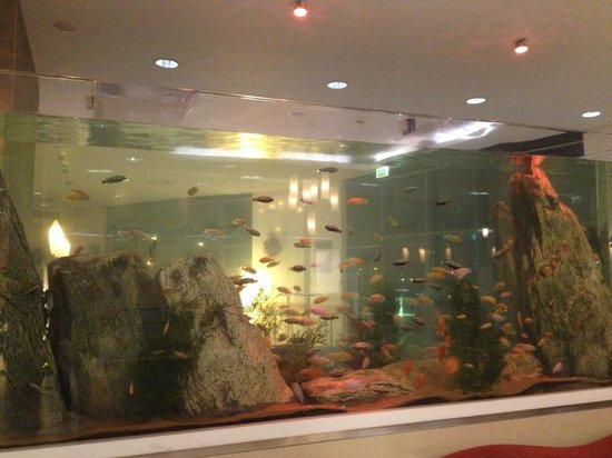 Hotel fish tank picture of radisson blu waterfront for Fish hotel tank