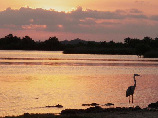 Crystal river sunrise picture of florida fishing for Crystal river fl fishing report