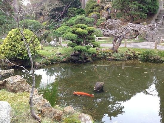 Koi garden picture of japanese tea garden san francisco for Koi pond japanese tea garden san francisco