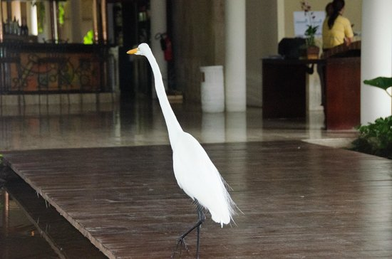 Paradisus Punta Cana: This fella appeared everywhere, including the lobby.
