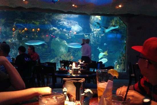 Picture Of Downtown Aquarium Houston Tripadvisor