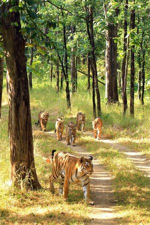 Rajasthan Tour by Car and Driver - Private Day Tours