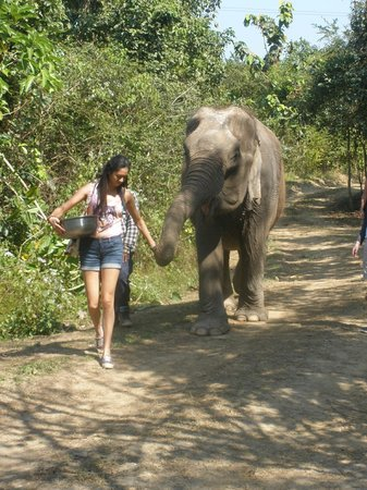 WFFT - Picture of Wildlife Friends of Thailand, Tha Yang ...