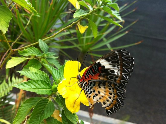 Butterfly 2 Picture Of The Butterfly Garden Charlotte