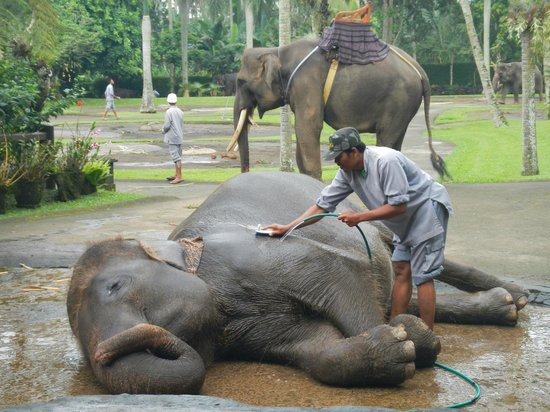 This photo of Elephant Safari Park, Taro Ubud is courtesy of TripAdvisor