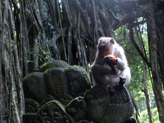 This photo of Monkey Forest is courtesy of TripAdvisor