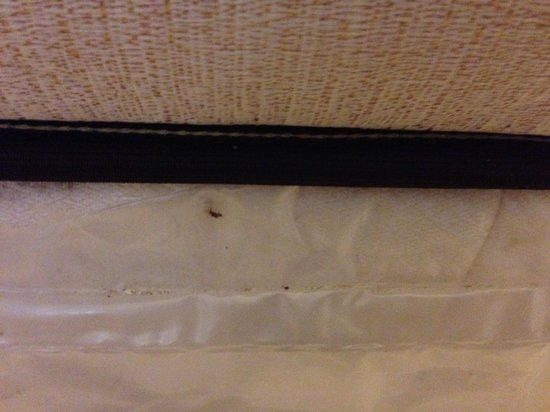 East Hotel Miami Bed Bugs