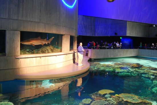 A Presenter Explains The Marinelife Present In The Huge Aquarium Picture Of National Aquarium