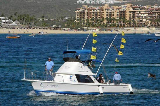 Enjoy the tuna captain picture of pisces sportfishing for Pisces fishing cabo