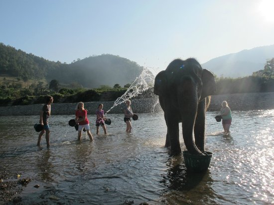 Photos of Elephant Nature Park, Chiang Mai