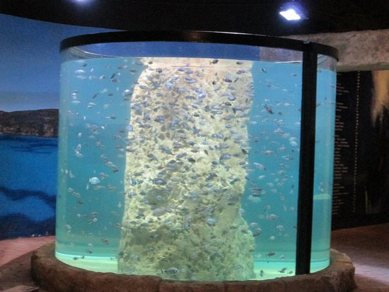 A seriously smart fish tank picture of malta national for Smart fish tank
