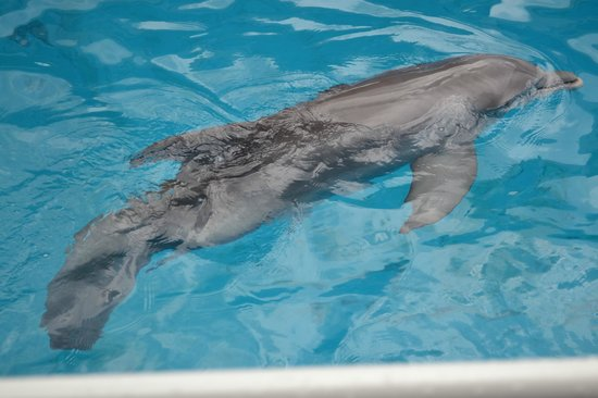 Winter The Dolphin Picture Of Clearwater Marine Aquarium