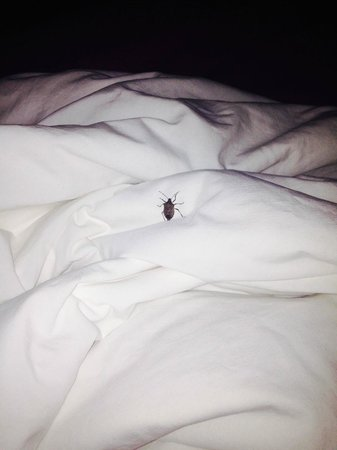 Quality Inn Christiansburg: enjoy stink bugs on your pillow? then this is the place for you.