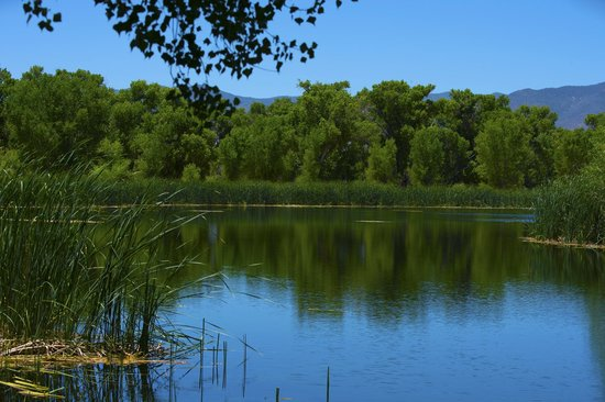 Pond With Diverse Birds Picture Of Dead Horse Ranch State Park Cottonwood Tripadvisor