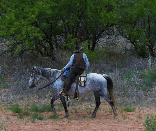 Adventure Trail Trail Horse Adventures