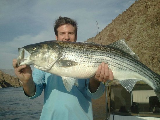 lake mead fishing fun picture of las vegas fishing