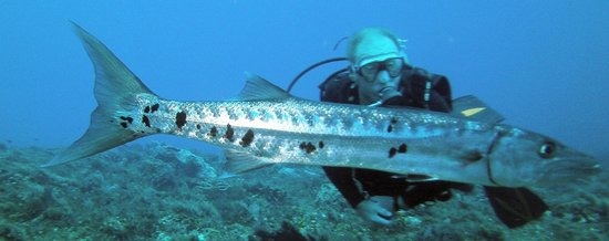 ooooo Baracuda! - Picture of Dive with Martin, Cozumel - TripAdvisor