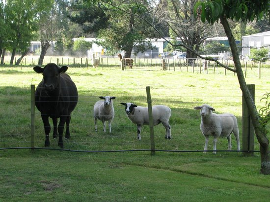Rotorua Hideaway Lodge: Some of the very friendly animals on the property