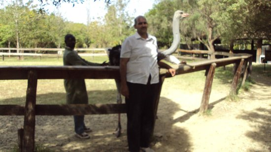 Maasai Ostrich Resort: This is a tamed ostrich and people can ride over it.