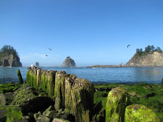 Miller Tree Inn Bed & Breakfast: La Push Beach in Olympic National Park