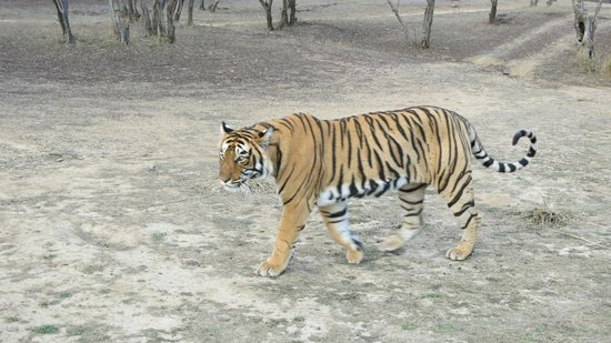 Photo of Tiger Safari Resort Sawai Madhopur