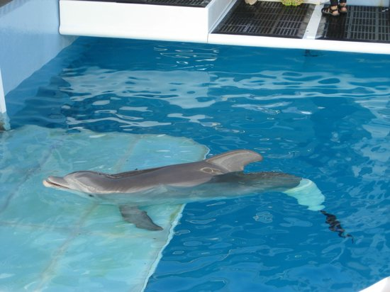 Winter - Picture of Clearwater Marine Aquarium, Clearwater ...