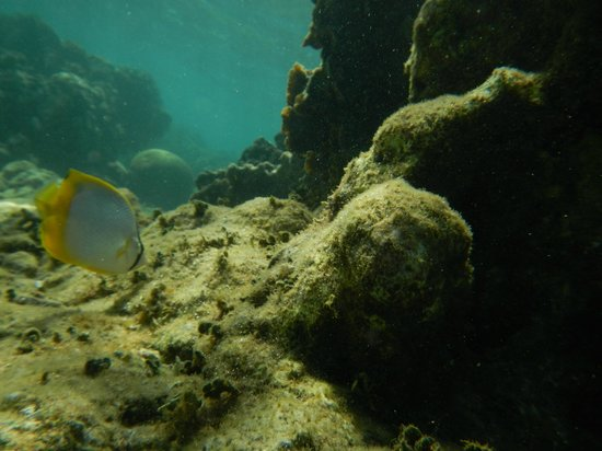 Fins 'n Flippers: Awesome snorkeling at the end of the pier.