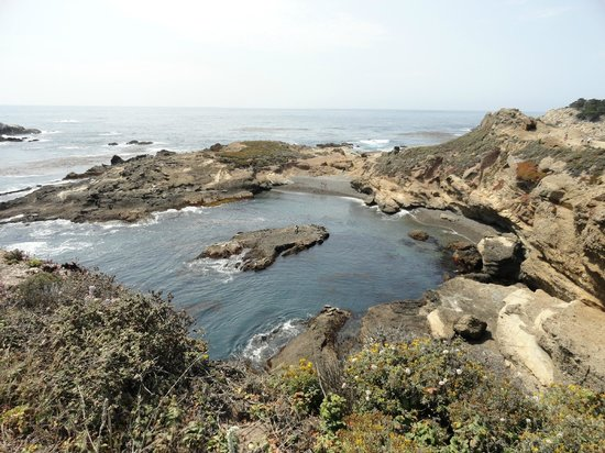 Point Lobos State Reserve: Sea Lions all the way down