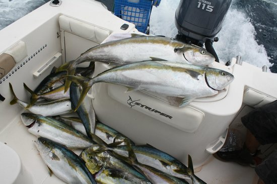 Reel to Reef Charters