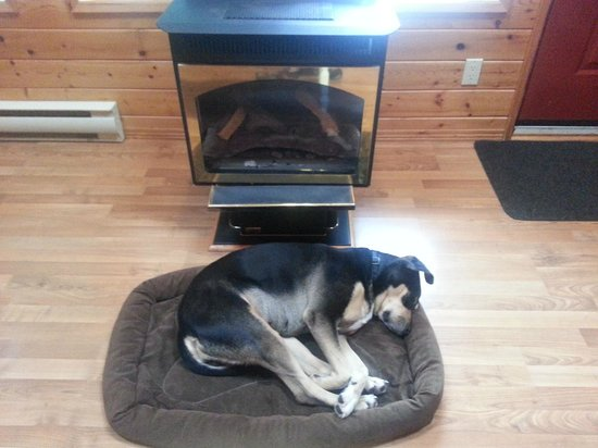 Oyster Bay Resorts: Our dog loved the getaway, too!