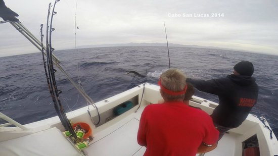 Marlin Fishing With Redrum Sportfishing Cabo San Lucas