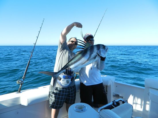 Roosterfish 2 for Rooster fish cabo