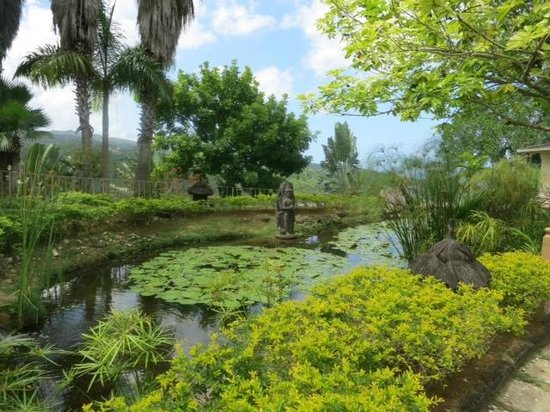Koi pond picture of silent waters villa montego bay for Koi pond james