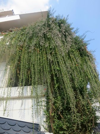 Hanging plants from upper balcony picture of girisadan - Hanging plants in balcony ...