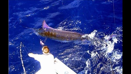 Fish Commander Private Day Charters
