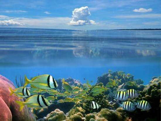 Snorkel with tropical fish picture of panama city for Florida tropical fish