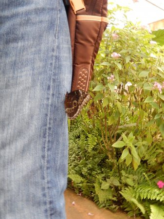 A butterfly resting on my thigh. - Picture of Butterfly Park of Benalmadena, ...