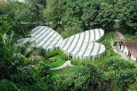 Butterfly house view from platform picture of jardin for Jardin botanico contacto