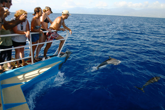 Whale Watching Guadeloupe