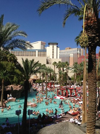Infested Pool Picture Of Flamingo Las Vegas Hotel