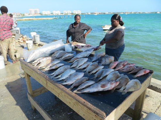 Cheryl took us to the local fish market picture of for Fishing nassau bahamas