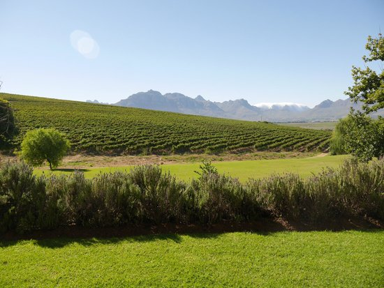 Asara Wine Estate & Hotel: A view of the vineyards