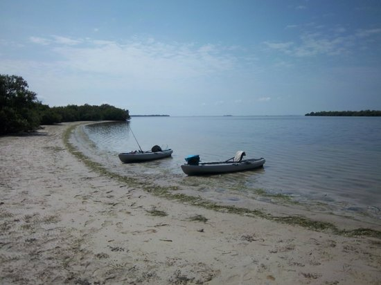 Attraction Review g d Reviews Gulf Coast Kayak Matlacha Florida.