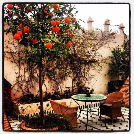 Riad Laurence Olivier: In the terrace... With little birds...
